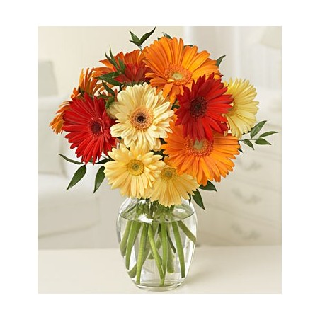 Gerbera Daisies Arranged in a Vase