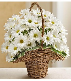 Basket Full of Daisies